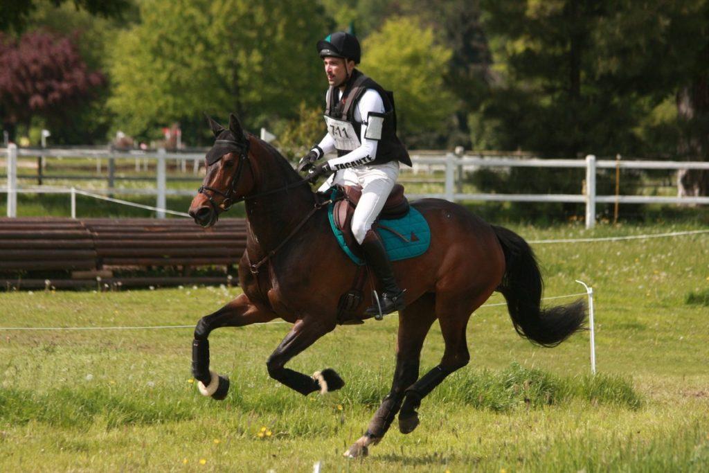 Ecurie-raphael-cochet-concours-complet-equitation-la-louviere-difda-du-very
