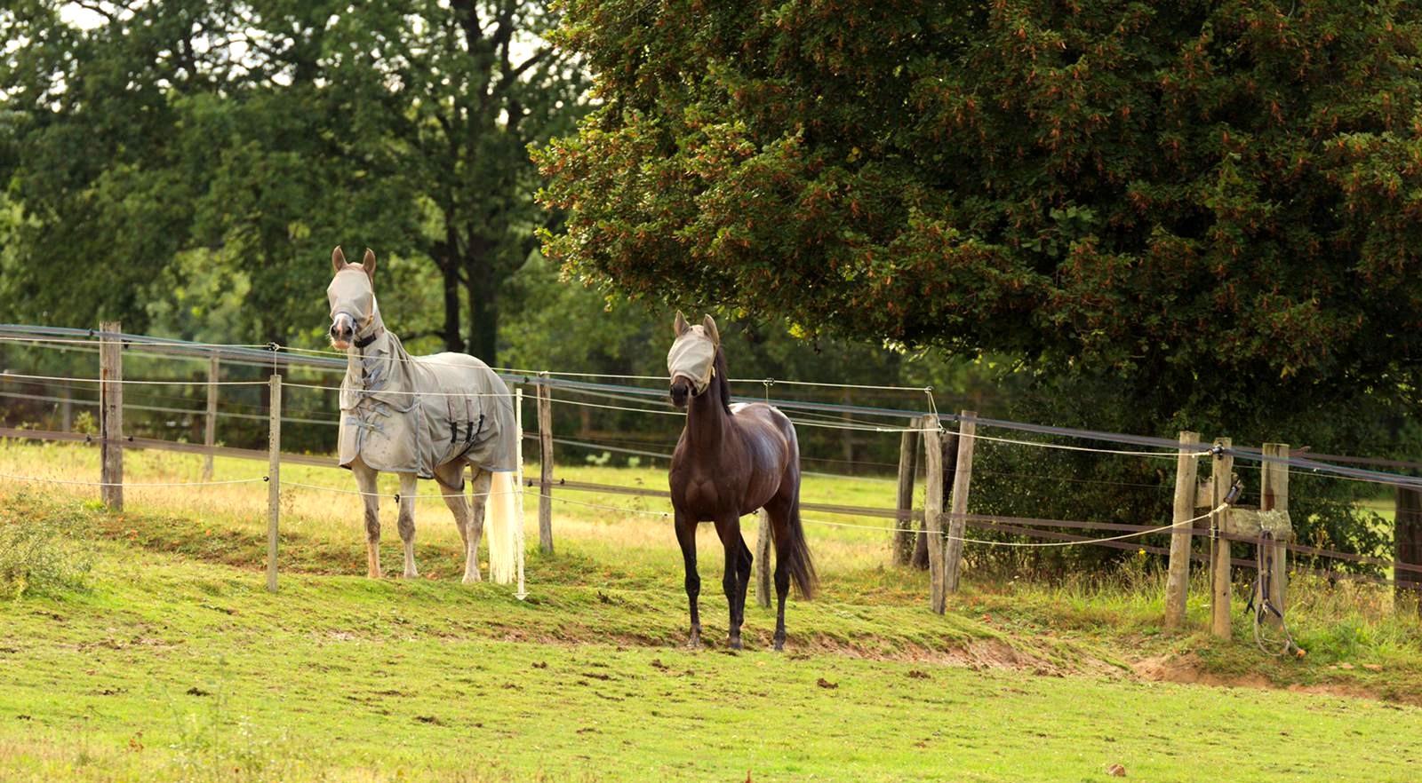 Ecurie-raphael-cochet-concours-complet-equitation-la-louviere-installatios-pré