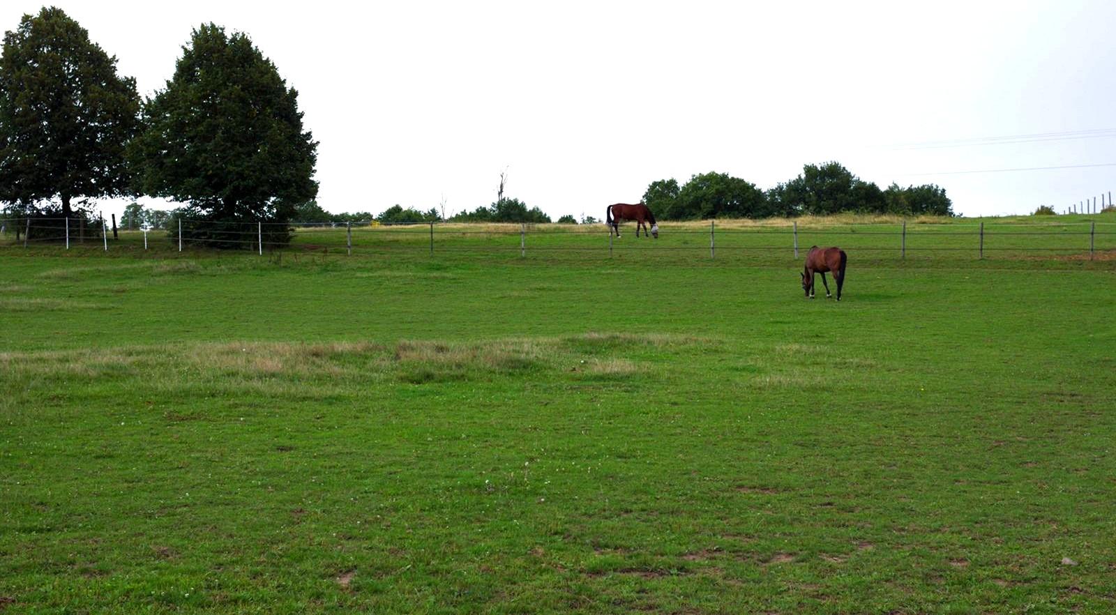Ecurie-raphael-cochet-concours-complet-equitation-la-louviere-installations-paddock