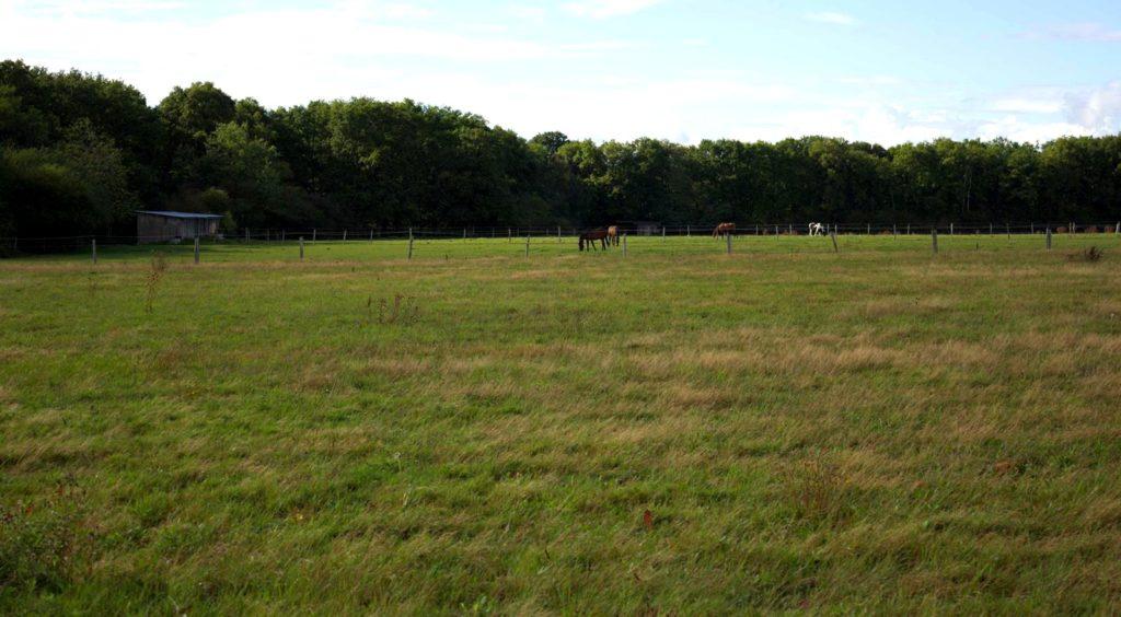 Ecurie-raphael-cochet-concours-complet-equitation-la-louviere-installations-pré