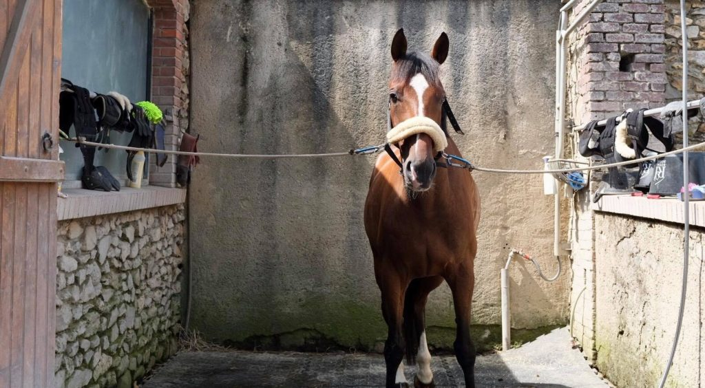 Ecurie-raphael-cochet-concours-complet-equitation-la-louviere-installations-douche